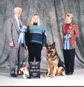 Two High in Class ribbons & his Companion Dog Obedience Title in one day!